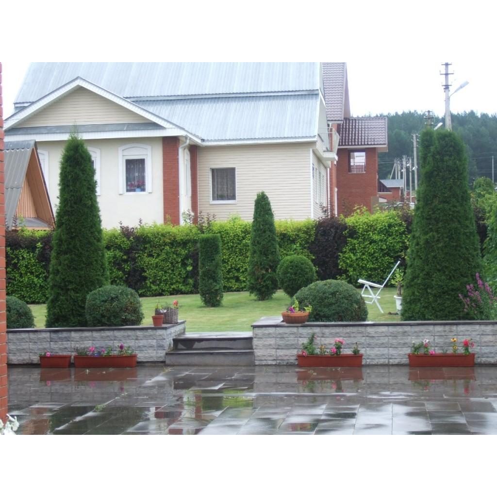 Топиары и живые изгороди.  Цена: 2000 -15000 рублей за 1 кв. м