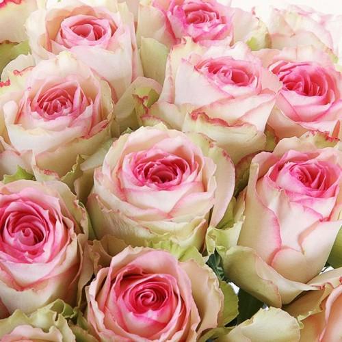 Роза 50 см.